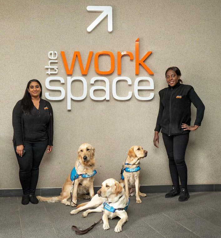 the workspace with guide dogs